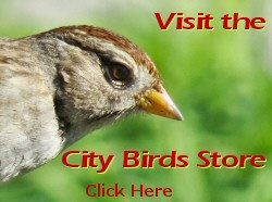 The City Birds Store