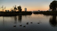Early Birds at Dawn on Lake Merritt, Oakland, CA