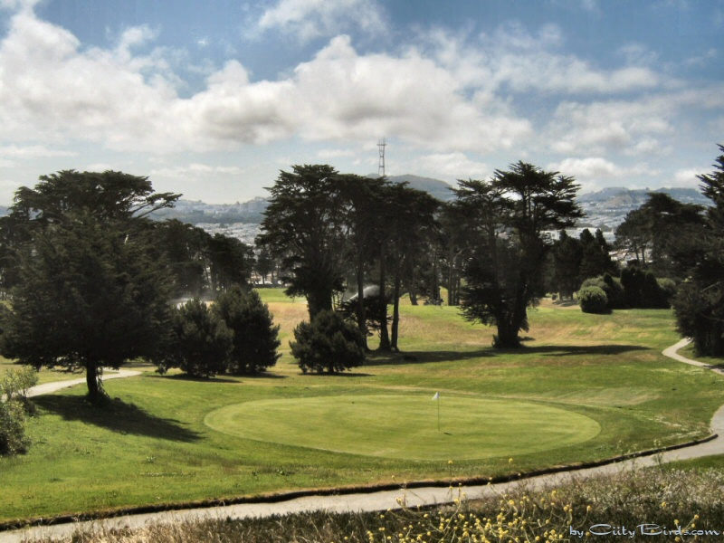 Mt sutro lincoln park golf course seen from point lobos for The pointe at lincoln park