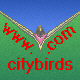 City Birds Logo