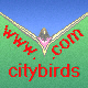 To City Birds Index Page